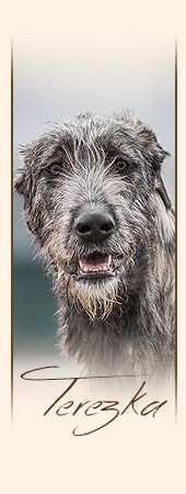 Irish Wolfhound Really Irish Haute Couture